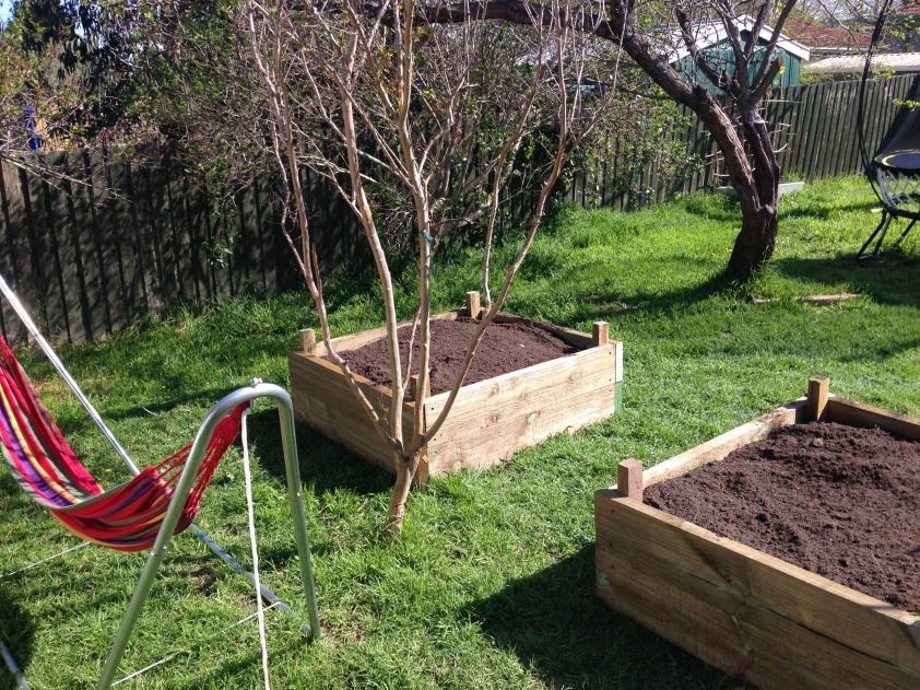 Completed raised vegetable beds, reading for planting in the Melbourne spring